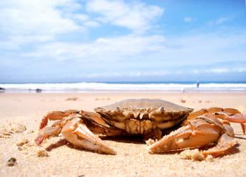 Chillin' By the Beach by dotau