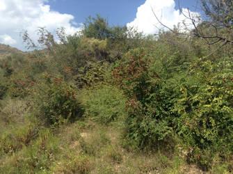Greek bushes by LW97