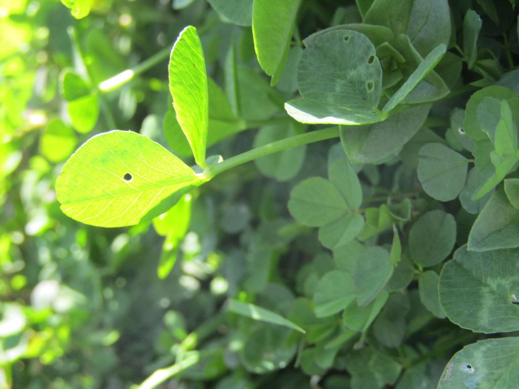 Plants by YattyTheWeirdo