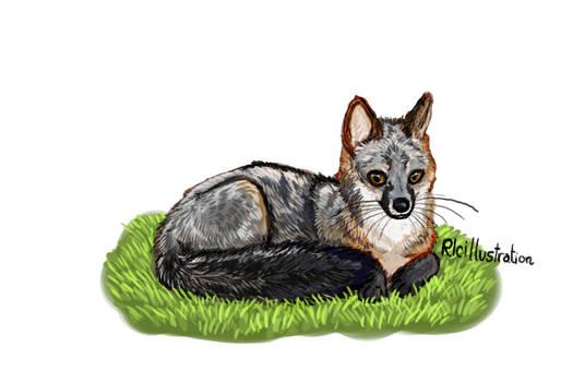 Chibi Fox 2