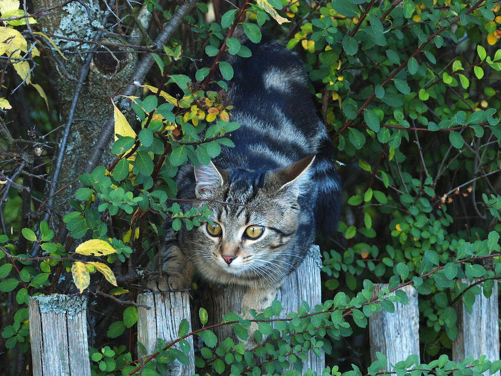 October 15th, Kittycat by Taliesin-Neonblack