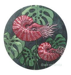 Nautilus (Underwater Tropics day 22)