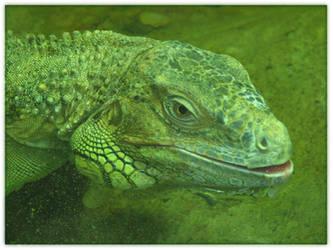 Iguana by MachyPikchu