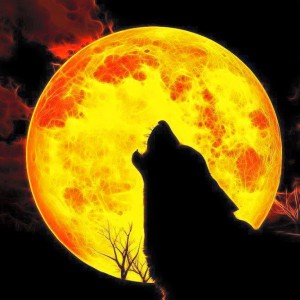Wolfs-Pain's Profile Picture