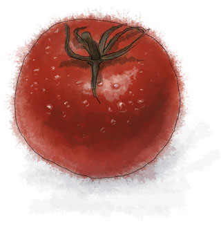 Tomato by torstan