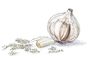 Garlic by torstan