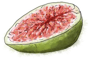 Fig by torstan