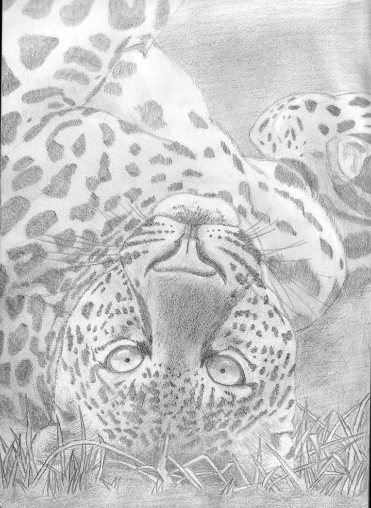 Leopard by MoonlightWhite
