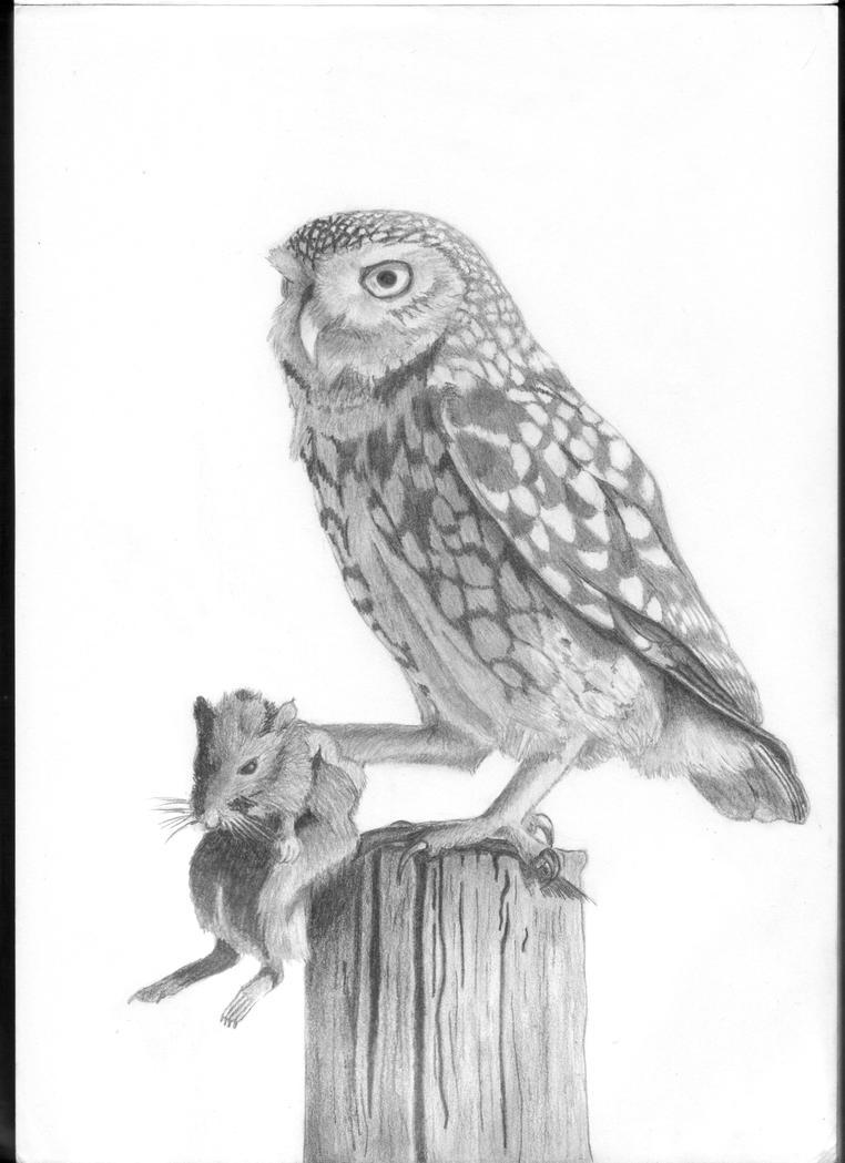 Little owl by MoonlightWhite