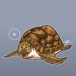 All of Dragonball: Turtle by Video320