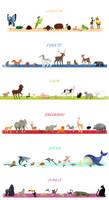 Animals Series