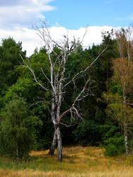 Trees by aimorou