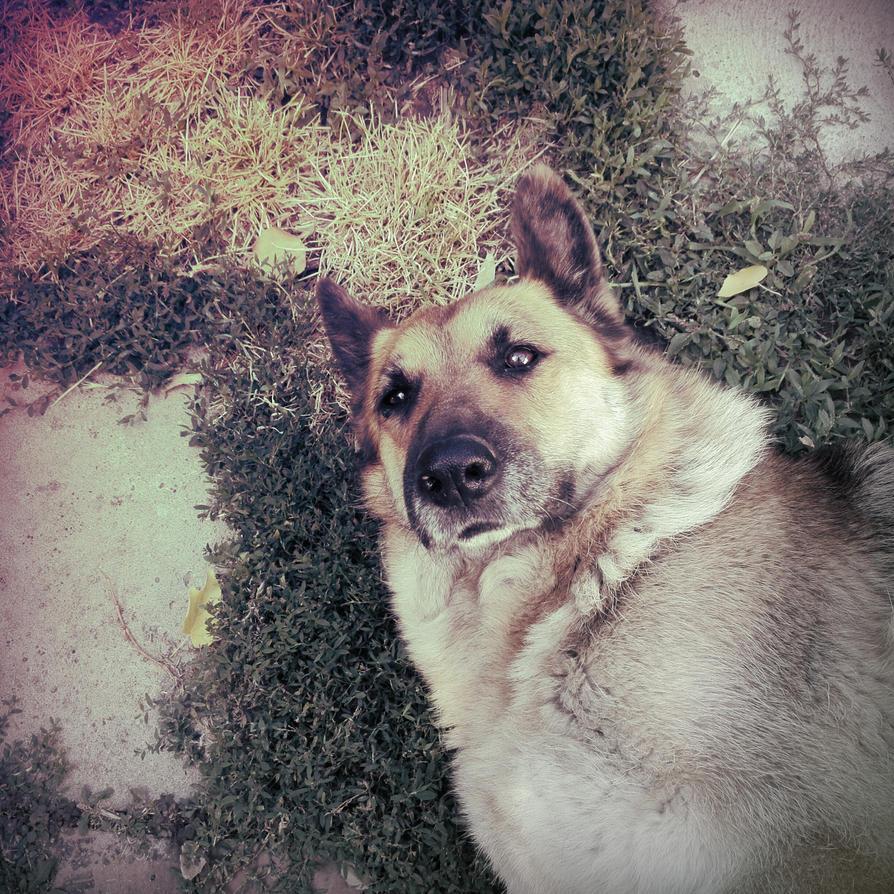 Doggie! by RainbowdarkVilny