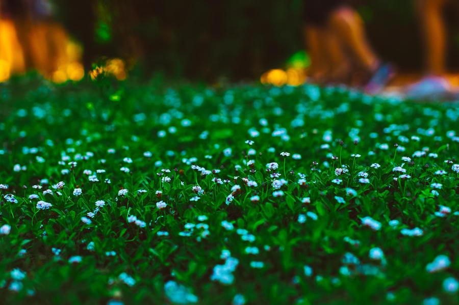 Granada's flowers by Gingershots
