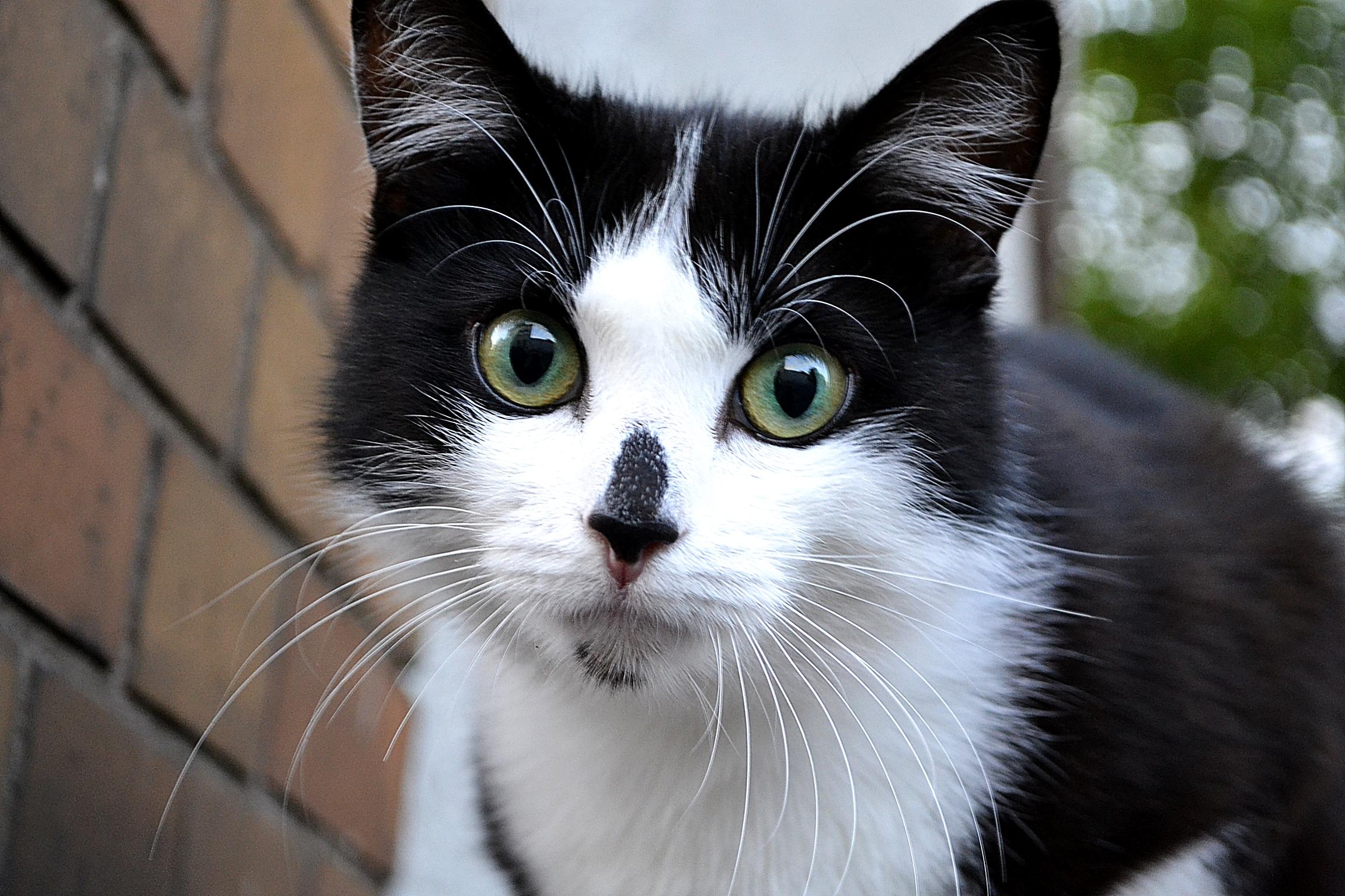 Cat by Roky320
