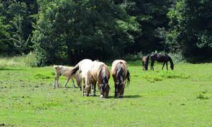 Horses by Roky320