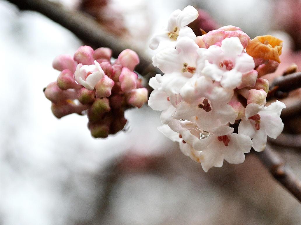 Flowers by Roky320
