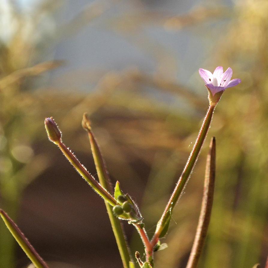Little Flower by Roky320