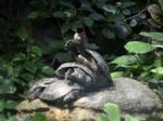 Turtles by Roky320