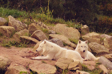 Wolves by Roky320