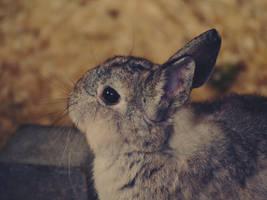 Bunny. by Roky320