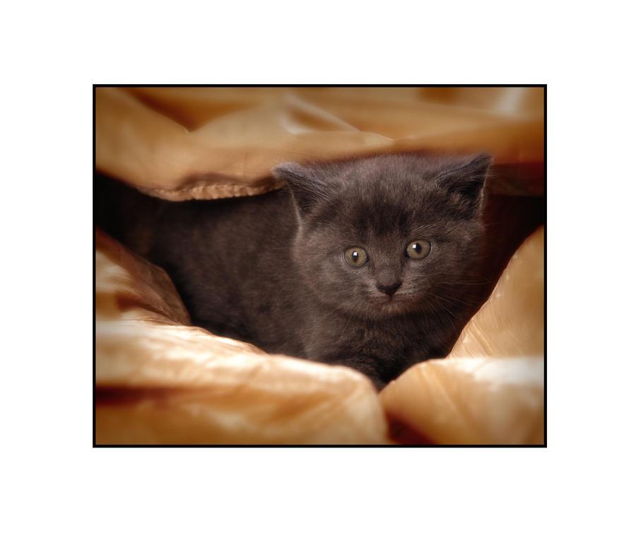 Kitten 1... by PicTd
