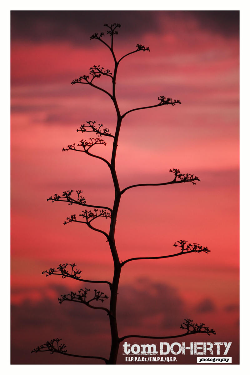 Lanzarote 5 by PicTd