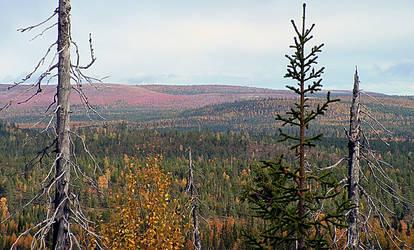 Lapland by Kaivo