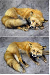 'Sulky' the Red Fox Soft Mount