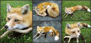 Petite Red Fox Soft Mount by WeirdCityTaxidermy