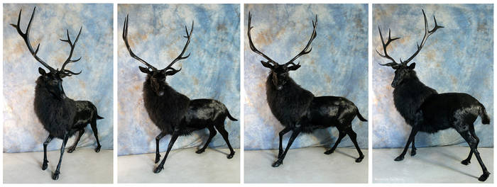 The Black Stag