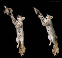 Cat in Pursuit of Quail by WeirdCityTaxidermy