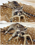 The Coon With Golden Eyes