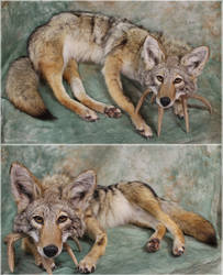 Torpey 'Yote by WeirdCityTaxidermy