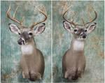 Brackmeyer Buck