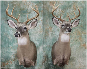 Brackmeyer Buck