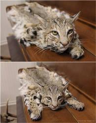 One Unhappy Cat