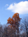 Last of the autumn leaves 1