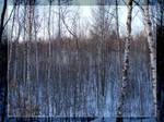 A many trees