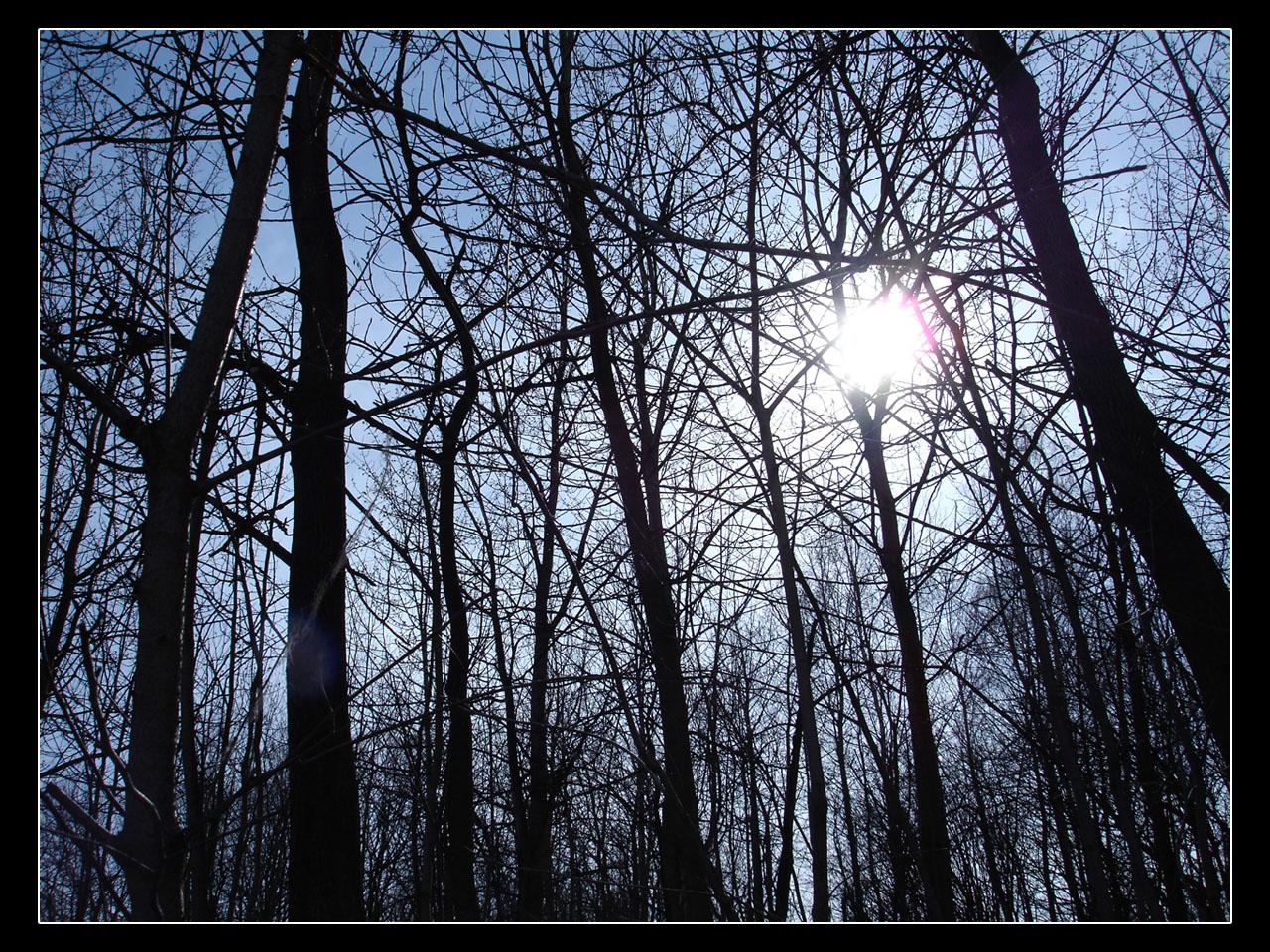 Many trees and sun