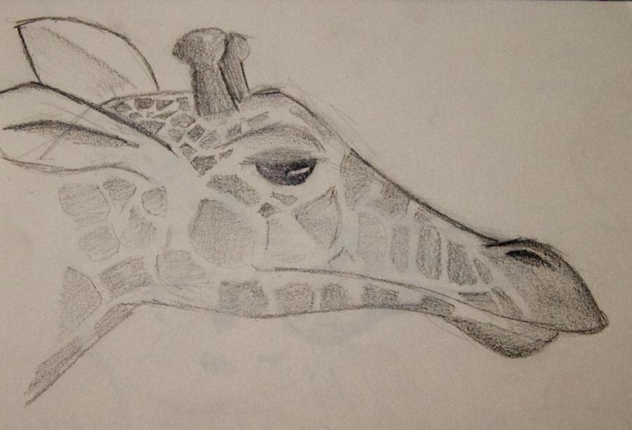 Baby giraffe by soffl