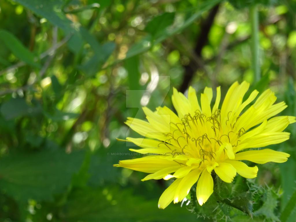 Yellow Flower 2 By Morbowilldestroyu On Deviantart