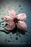 tears of spring II by verycre8iv