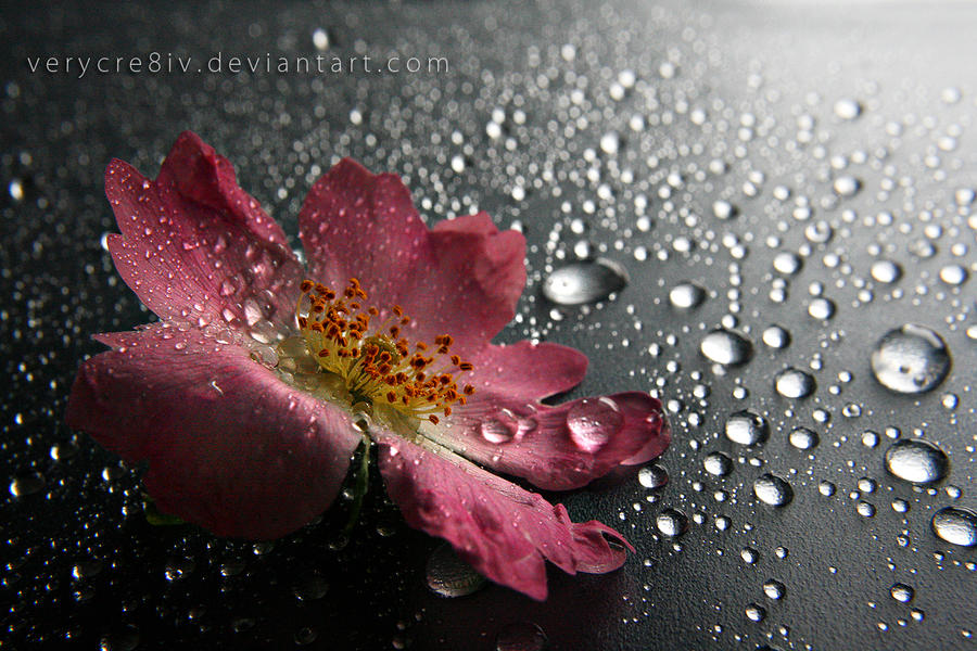 tears of spring V by verycre8iv