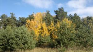 Yellow among green
