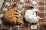 Not so little cats