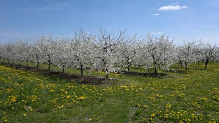 Memory of spring