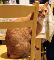 Mr. Rufus Ginger-Catton esq., QC, FRS