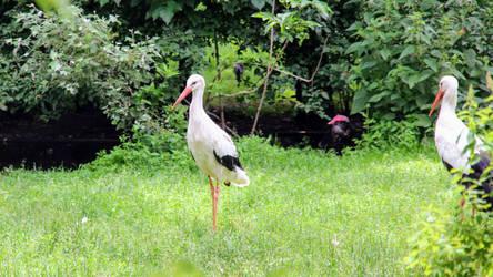 Giant storks of death