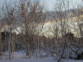 Trees after Snow by Madiera